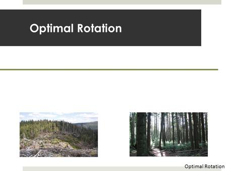 Optimal Rotation. Biological vs. Economic Criteria  What age should we harvest timber?  Could pick the age to yield a certain size  Or could pick an.