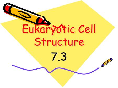 Eukaryotic Cell Structure 7.3. Just like on a sports team or in an office, cells are composed of many important people/organelles that each fulfill a.