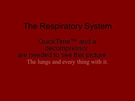 The Respiratory System The lungs and every thing with it.