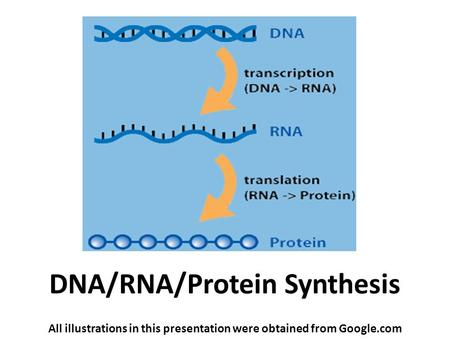 DNA/RNA/Protein Synthesis All illustrations in this presentation were obtained from Google.com.