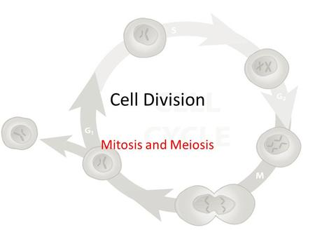 biology study guide cell division dna View notes - chapter 11 -the cell cycle and cell division - study guide from bio eco at parkview high school study guide adapted by dr drew kohlhorst to accompany life: the science of biology.