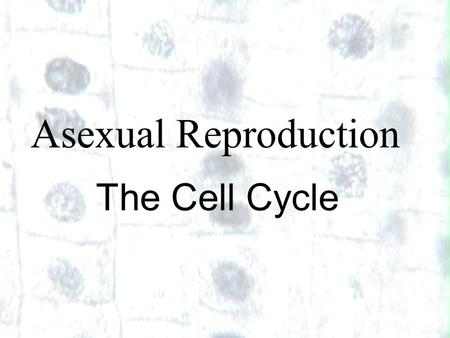 Asexual Reproduction The Cell Cycle 1.