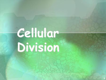 1 Cellular Division. 2 Cell Division All cells are derived from pre- existing cells All cells are derived from pre- existing cells New cells are produced.