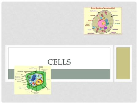 CELLS. ALL LIVING THINGS HAVE: Organization Ability to grow and develop Respond to environment Reproduce.
