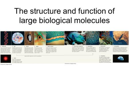 The structure and function of large biological molecules