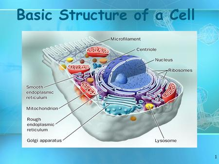 Basic Structure of a Cell 1. Review Facts About Living Things 2.