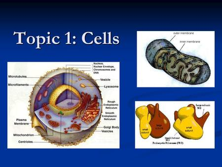 Topic 1: Cells. 1.1 Cell Theory 1.1.1 Discuss the theory that living organisms are composed of cells. (3) Skeletal muscle and some fungal hyphae are not.