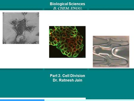 Biological Sciences B. CHEM. ENGG. Part 2. Cell Division Dr. Ratnesh Jain.