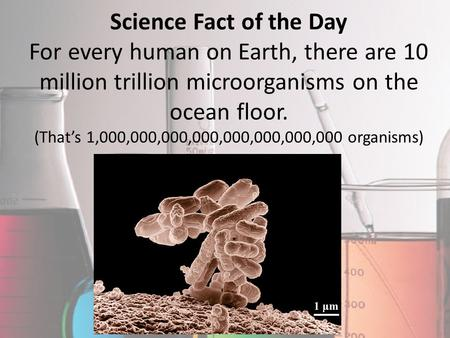 Science Fact of the Day For every human on Earth, there are 10 million trillion microorganisms on the ocean floor. (That's 1,000,000,000,000,000,000,000,000.