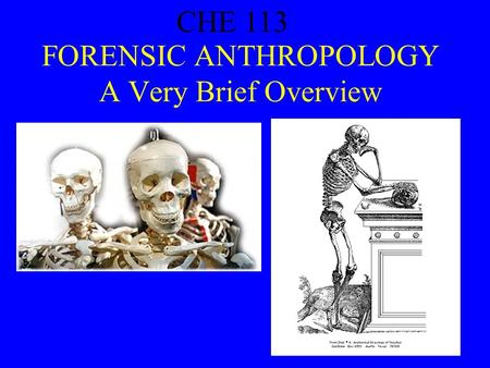 CHE 113 1 FORENSIC ANTHROPOLOGY A Very Brief Overview CHE 113.