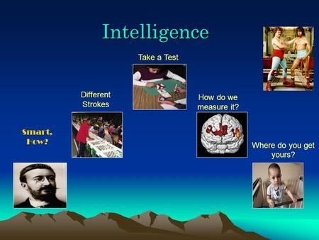 Intelligence Smart, How? Different Strokes Take a Test How do we measure it? Where do you get yours?