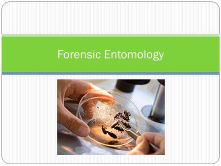 Forensic Entomology.