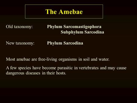 The Amebae Old taxonomy:Phylum Sarcomastigophora Subphylum Sarcodina New taxonomy:Phylum Sarcodina Most amebae are free-living organisms in soil and water.