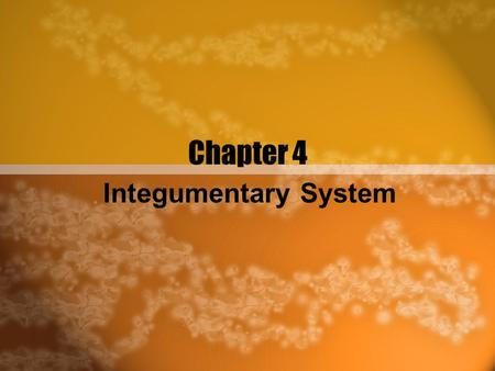 Chapter 4 Integumentary System.