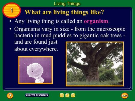 What are living things like?