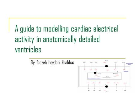 A guide to modelling cardiac electrical activity in anatomically detailed ventricles By: faezeh heydari khabbaz.