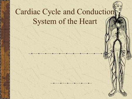 Cardiac Cycle and Conduction System of the Heart.