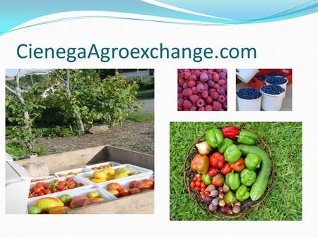 CienegaAgroexchange.com. Executive Summary Increasing demand for sustainable agricultural products Commercialization of sustainable production not bullet.