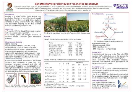 GENOMIC MAPPING FOR DROUGHT TOLERANCE IN SORGHUM Introduction Drought is a major abiotic factor limiting crop production. Sorghum is one of the most drought.