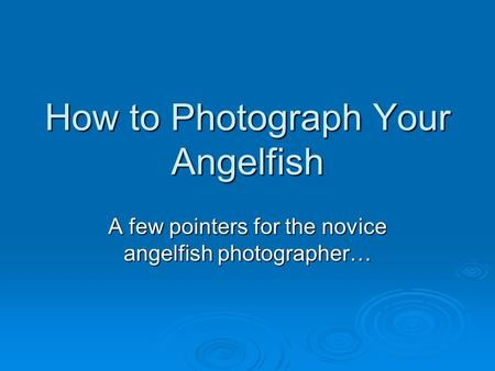 How to Photograph Your Angelfish A few pointers for the novice angelfish photographer…