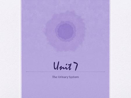 Unit 7 The Urinary System.