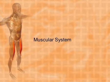 Muscular System. KEY TERMS Abduction Adduction Cardiac muscle Circumduction Contract Contractibility Contracture Elasticity Excitability Extensibility.