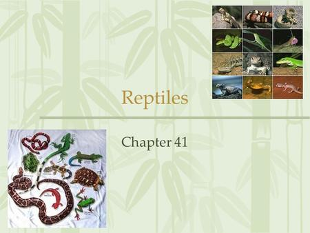Reptiles Chapter 41. Origin & Evolution of Reptiles Section 41.1.