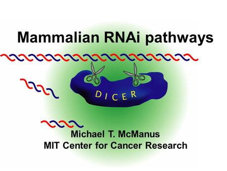 Mammalian RNAi pathways Michael T. McManus MIT Center for Cancer Research.
