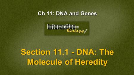 Section DNA: The Molecule of Heredity