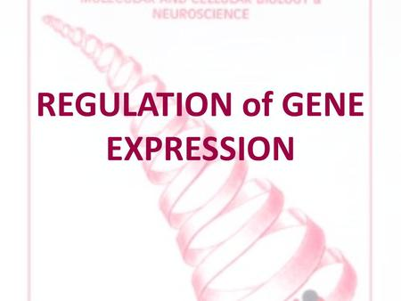 REGULATION of GENE EXPRESSION. GENE EXPRESSION all cells in one organism contain same DNA every cell has same genotype phenotypes differ skin cells have.