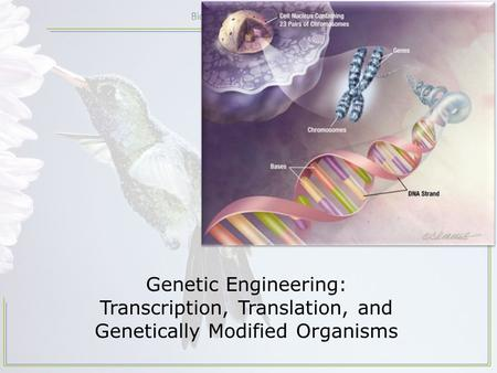 Genetic Engineering: Transcription, Translation, and Genetically Modified Organisms.