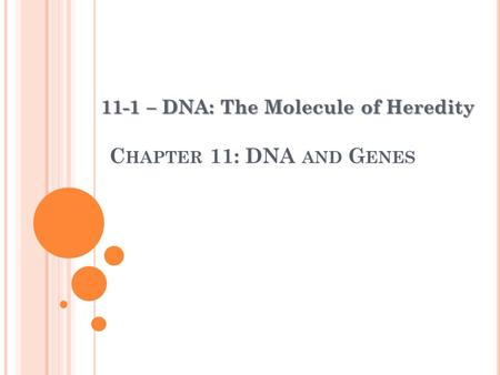 C HAPTER 11: DNA AND G ENES 11-1 – DNA: The Molecule of Heredity.