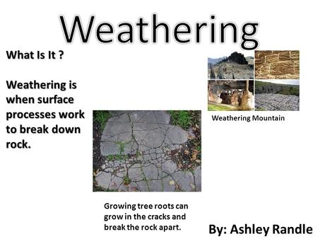 By: Ashley Randle What Is It ? Weathering is when surface processes work to break down rock. Weathering Mountain Growing tree roots can grow in the cracks.