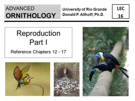 ADVANCED LEC 16 ORNITHOLOGY University of Rio Grande Donald P. Althoff, Ph.D. Reproduction Part I Reference Chapters 12 - 17.