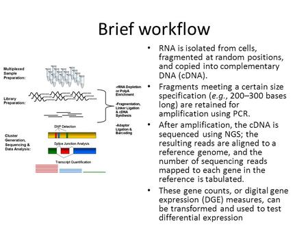 Brief workflow RNA is isolated from cells, fragmented at random positions, and copied into complementary DNA (cDNA). Fragments meeting a certain size specification.