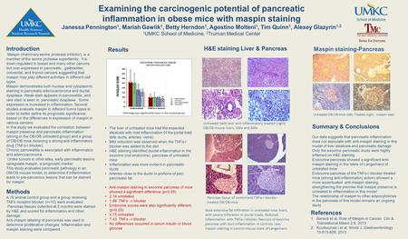 Examining the carcinogenic potential of pancreatic inflammation in obese mice with maspin staining Janessa Pennington 1, Mariah Gawlik 1, Betty Herndon.