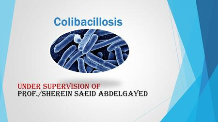 Colibacillosis UNDER SUPERVISION OF PROF./SHEREIN SAEID ABDELGAYED.