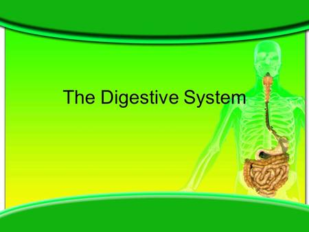 The Digestive System. Related Medical Terminology GI – Gastro-intestinal Colo- Colon Cheilo – lips Gastro – stomach Gingivo – gums -ia – condition Stomato.
