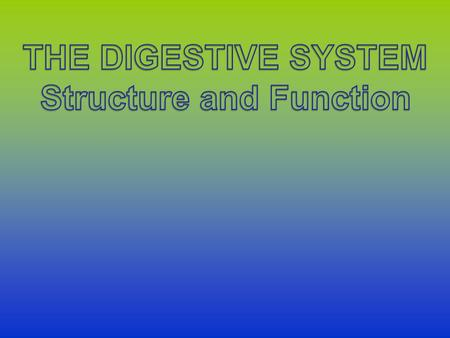 System Overview The digestive system is responsible for breaking down food into a state in which it can be absorbed into the blood stream. It starts in.