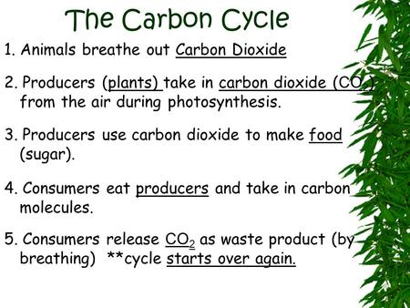 The Carbon Cycle 1. Animals breathe out Carbon Dioxide 2. Producers (plants) take in carbon dioxide ( CO 2 ) from the air during photosynthesis. 3. Producers.