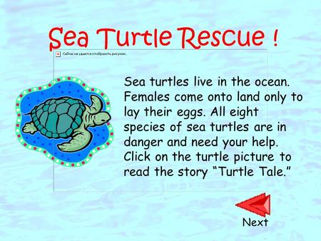 Sea Turtle Rescue ! Sea turtles live in the ocean. Females come onto land only to lay their eggs. All eight species of sea turtles are in danger and need.