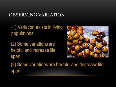 OBSERVING VARIATION (1) Variation exists in living populations. (2) Some variations are helpful and increase life span. (3) Some variations are harmful.