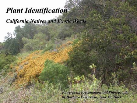 Plant Identification California Natives and Exotic Weeds Powerpoint Presentation and Photographs by Barbara Eisenstein, June 10, 2003.