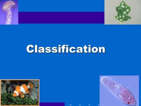 Classification Go to Section: In the following few slides, you will find 14 different organisms, each of them labeled with a letter. In your groups,