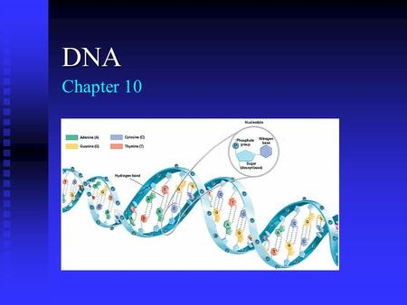 Chapter 10 DNA 10.1 Discovery of DNA Griffith's Experiments (1928) Griffith's Experiments (1928) Griffith's experiments showed that hereditary material.