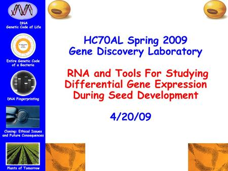 HC70AL Spring 2009 Gene Discovery Laboratory RNA and Tools For Studying Differential Gene Expression During Seed Development 4/20/09tratorp.