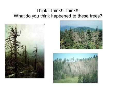 Think! Think!! Think!!! What do you think happened to these trees?