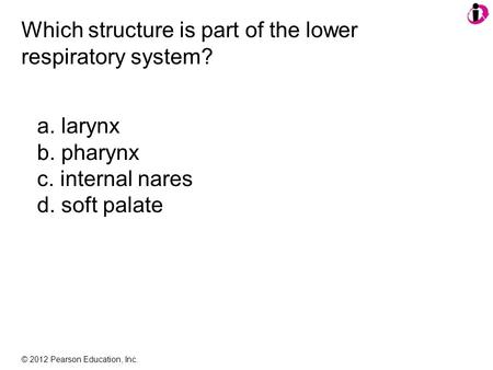 © 2012 Pearson Education, Inc. Which structure is part of the lower respiratory system? a. larynx b. pharynx c. internal nares d. soft palate.