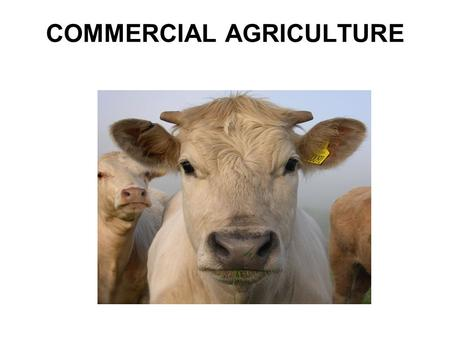 COMMERCIAL AGRICULTURE. Agribusiness: An industrialized, corporate form Of agriculture, organized into networks Of agricultural product controlled by.