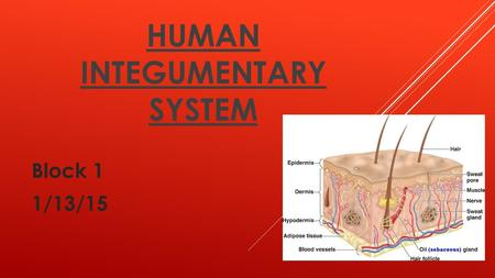 HUMAN INTEGUMENTARY SYSTEM Block 1 1/13/15. INTRODUCTION Throughout this presentation, the audience will develop a better understanding of the human integumentary.
